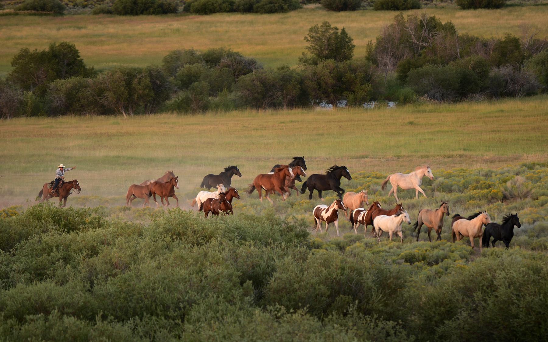 roaming-horses-laramie-river.jpg