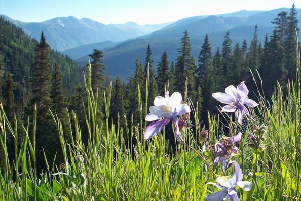 flower-meadows-deer-valley.jpg