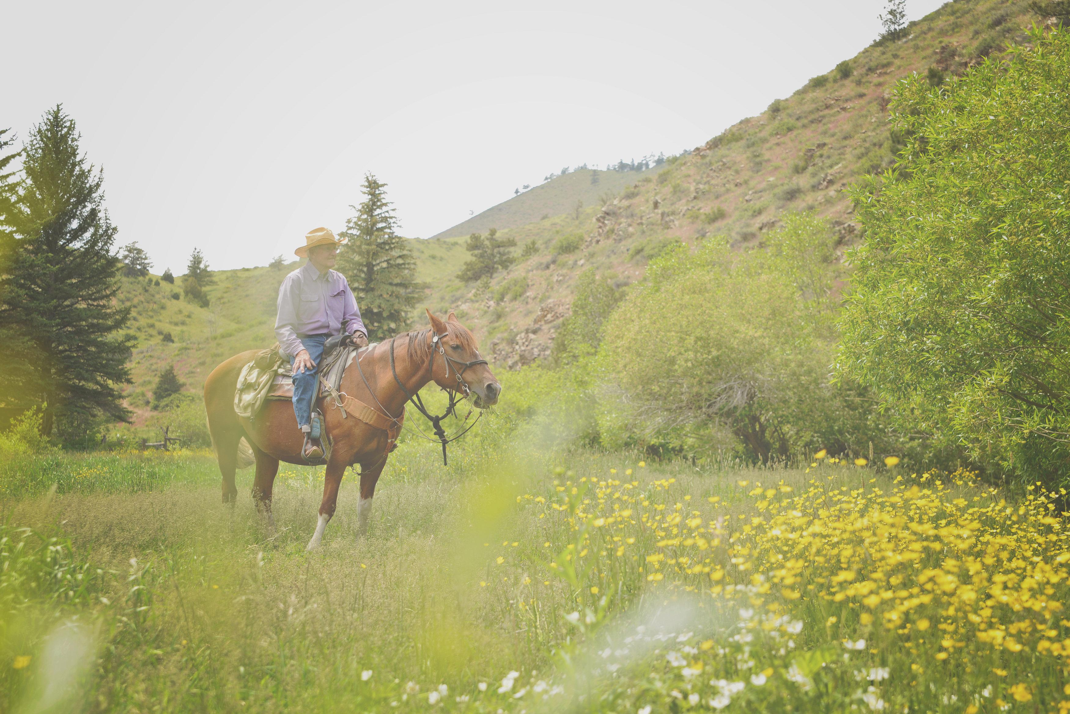 horse-meadow-cherokee-park.jpg