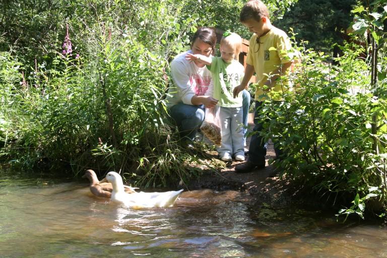 duck-watching-tumbling-river.jpg