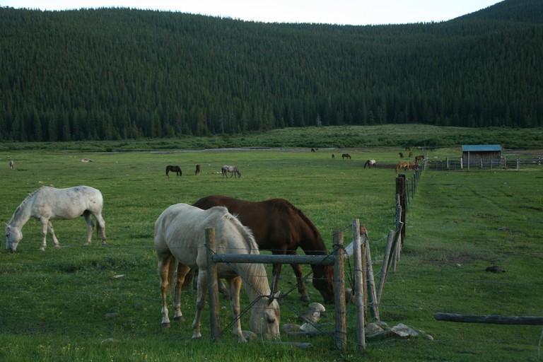 grazing-horses-tumbling-river.jpg