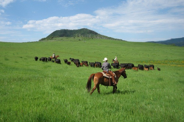 horses-cattle-home-ranch.jpg