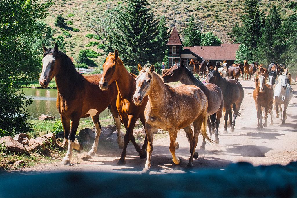 horses-running-cherokee-park.jpg