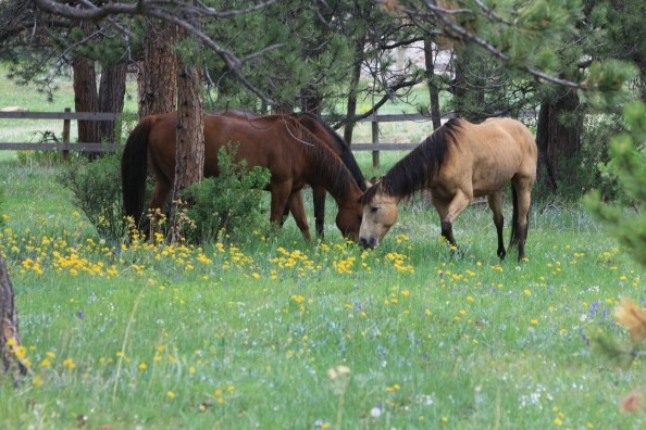 horses-in-pasture_at_sundancetrail.com_.jpg