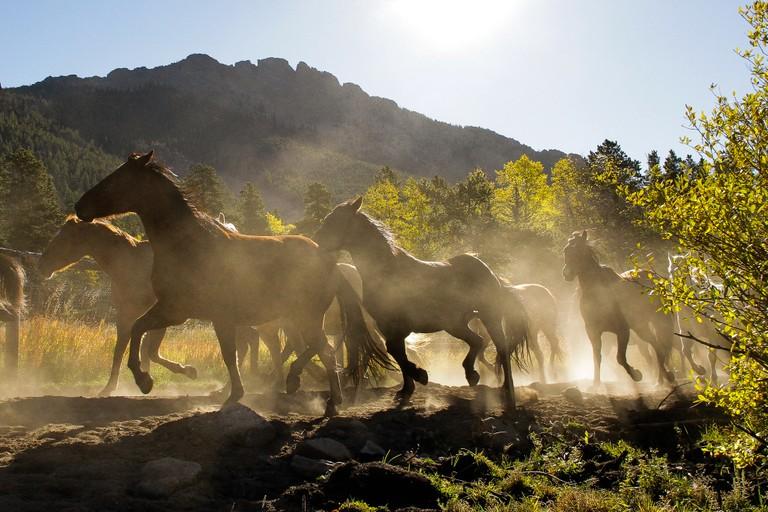 horses-sunset-riding.jpg