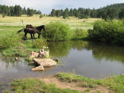 sundancetrail.com_horses-at-creek.jpg