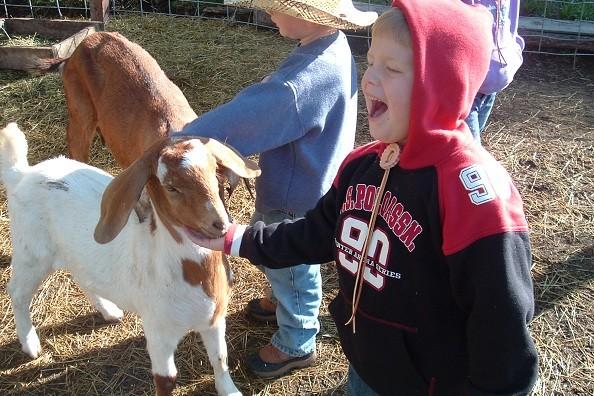 goat-petting-elk-mountain.jpg