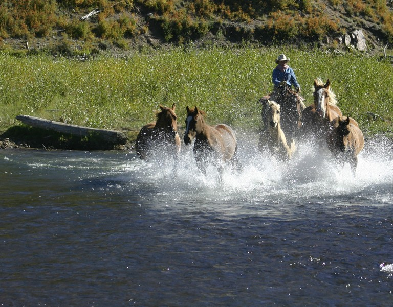 horses-water-rainbow-trout.jpg