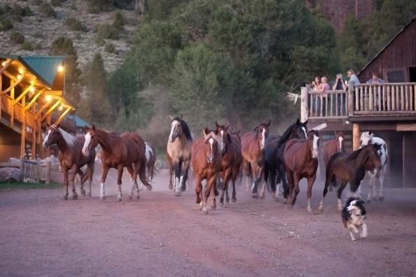 running-horses-black-mountain.jpg