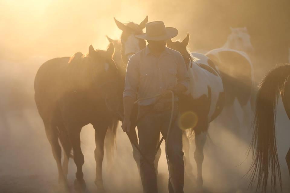 cowboy-and-horses.jpg