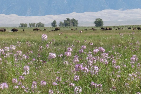 flower-meadow-zapata-ranch.jpg