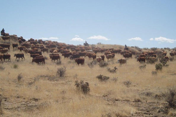 stampede-at-zapata-ranch.jpg