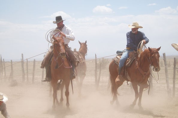 running-horses-zapata-ranch.jpg