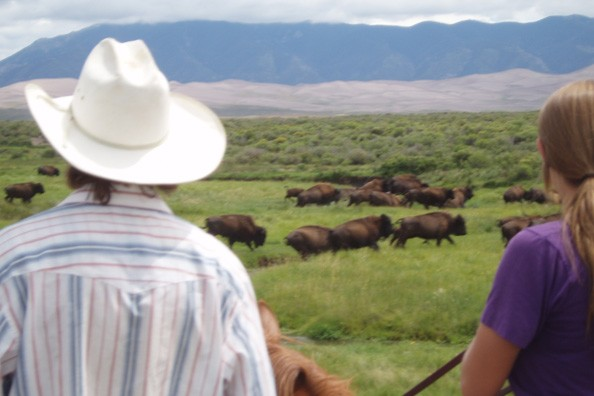 watching-bison-zapata-ranch.jpg