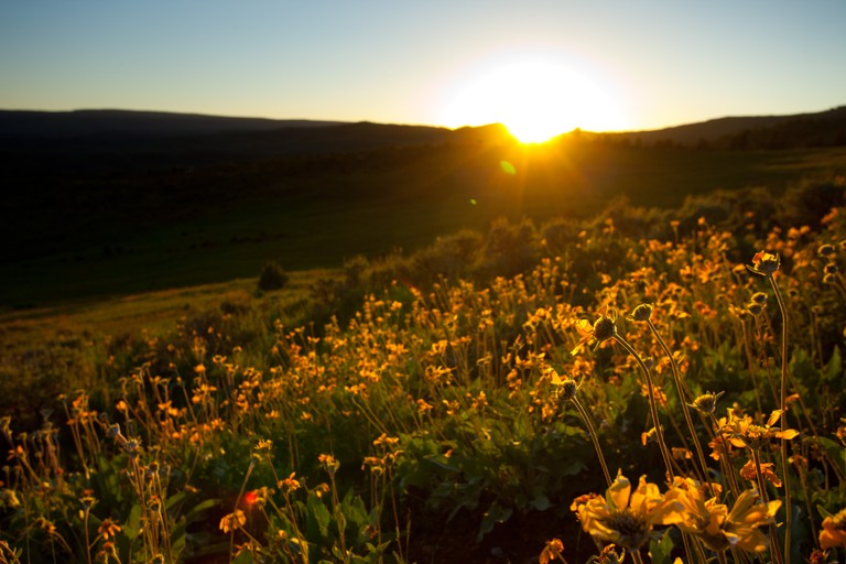 sunset-meadow-black-mountain.jpg
