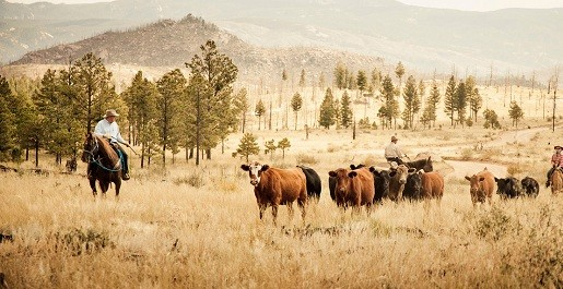 roaming-cattle-lost-valley.jpg