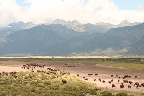 bison-and-mountains-zapata.jpg
