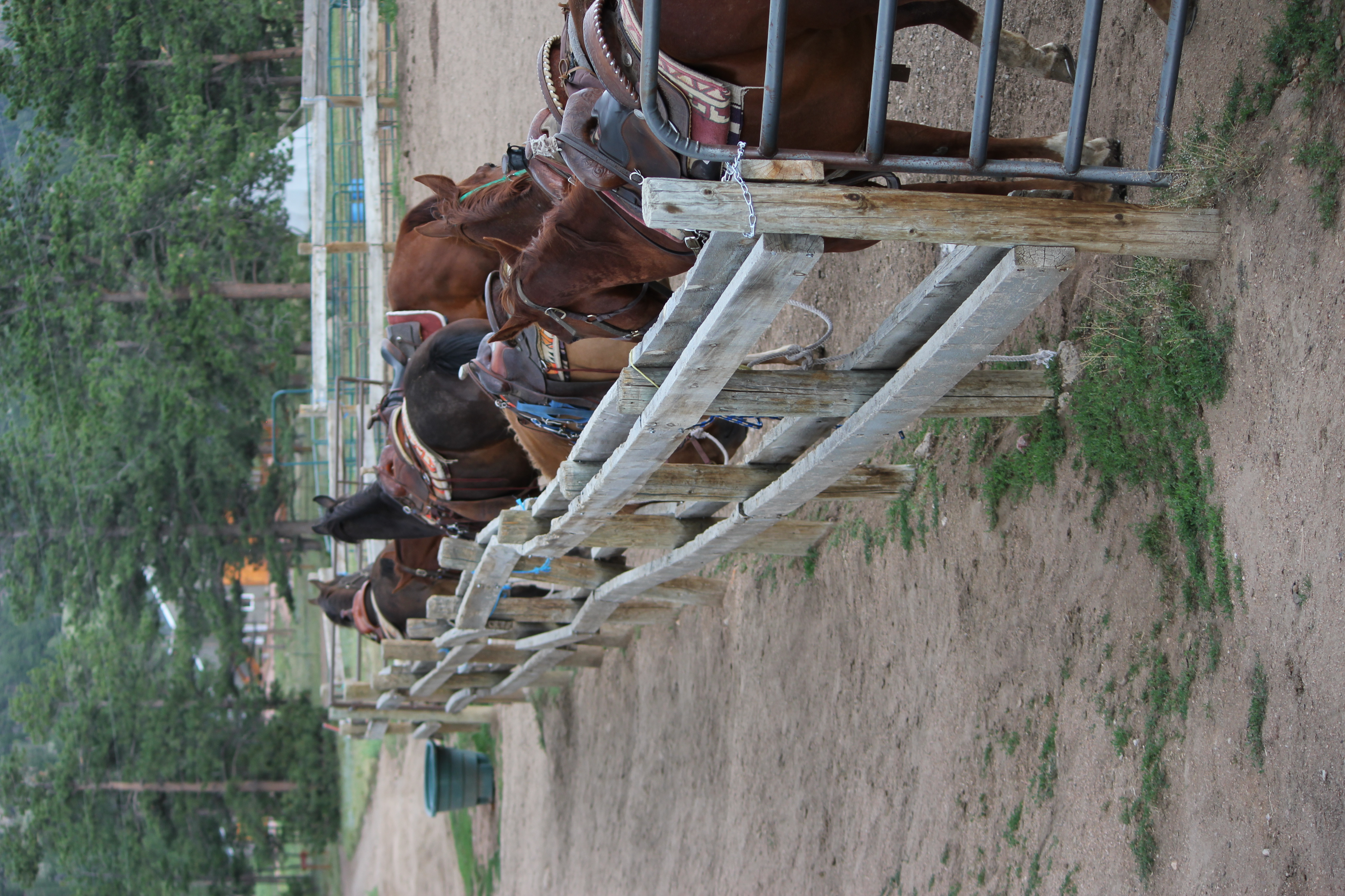 horses-at-sundance-trail.jpg