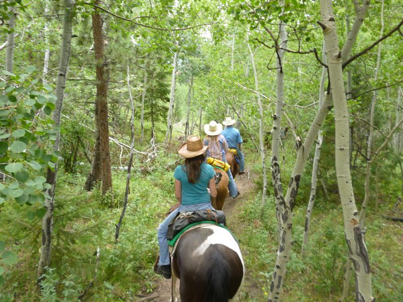 horseback-trail.jpg