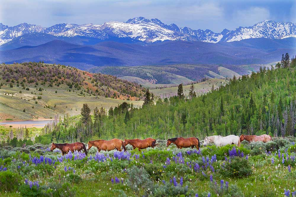 Horses, Mountains, Dude Ranch